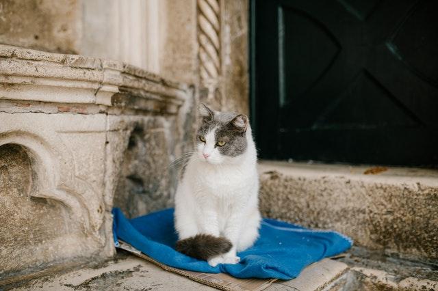 Kattenverzorging: hoe kunnen we het beste voor bejaarde katten zorgen?