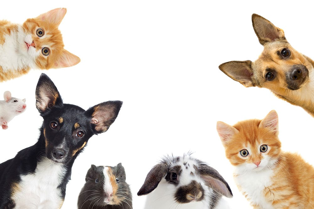 Which nutritional supplements can you give to your pet ; recommendations for CBD oil